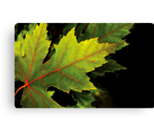 Red & Green Maple Leaf Canvas Print