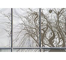 Tree Reflections Photographic Print
