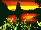Tiger Lilies at Sunset by barnsis