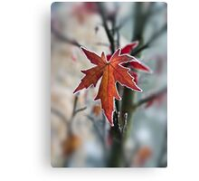Maple In Frost Canvas Print
