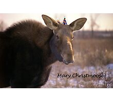 Mary Christmoose Photographic Print