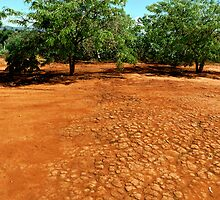 Red soil by Xander Ashwell