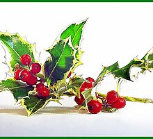 Christmas Holly by noffi