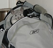 Bailey in a bag! by Claire Tennant