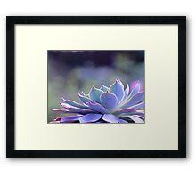 Echeveria Silver Queen Framed Print