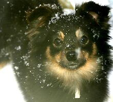 Bella Toy Australian Shepherd by doublejqh
