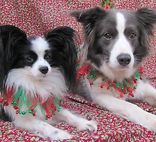 Happy Christmas from Zara and Sophie by fionajean
