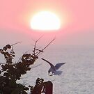 Seagull lands at Sunset by ienemien