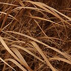 December&#x27;s Grasses by Lyle Hatch