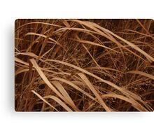 December's Grasses Canvas Print