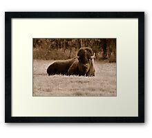 American Bison (Sepia) Framed Print