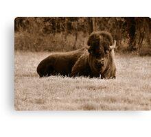 American Bison (Sepia) Canvas Print