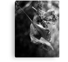 Dry flower 6 Canvas Print