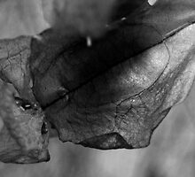Dry flower 9 by FotosdaMau