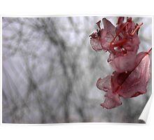 Dry flower 10 Poster