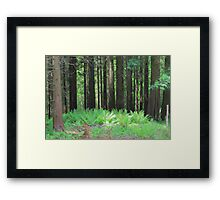Fern And Trees Composition Framed Print