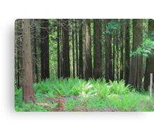 Fern And Trees Composition Canvas Print