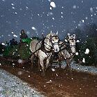 Winter Wonderland by Mark Van Scyoc
