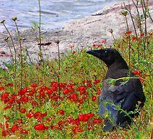 Crow by nikspix