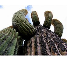 Sonoran Scenery Series ~ 1 Photographic Print