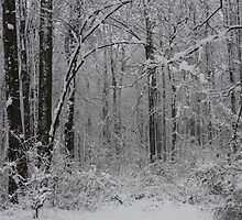 First Snowfall Of The Season In The Woods- 09 by goldnzrule