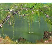 Lovely Swamp Photographic Print
