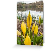 Yellow Skunk Cabbage Flower Greeting Card