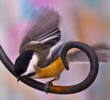 Flying Chickadee by (Tallow) Dave  Van de Laar