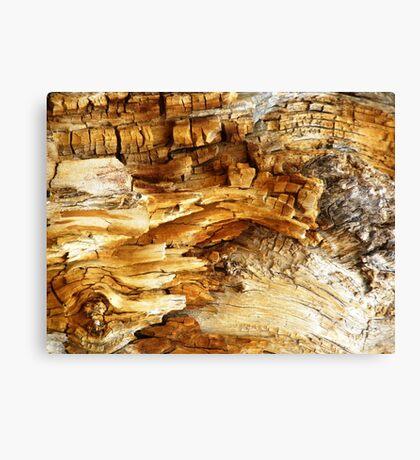 Decaying Log Canvas Print