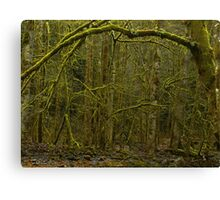 Forest of Narnia? Canvas Print