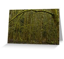 Forest of Narnia? Greeting Card