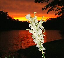 Yucca Blooms  Beside the Lake.  by barnsis