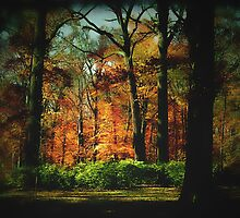 Fall in bloom by Judi Taylor