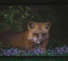Foxy  by Judi Taylor