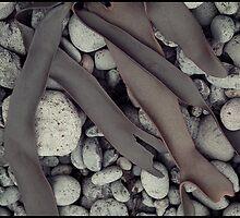 Kelp Abstract- 02 by Albert Sulzer