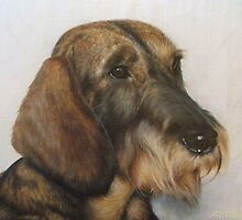 Casper the wire haired Dachshund by allspp