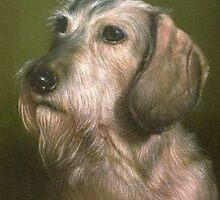 Lynnty the wire haired Dachshund by allspp