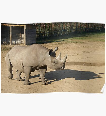 Rhinos Shadow Poster