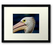 Portrait Of A Pelican Framed Print