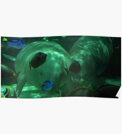 Mermaids of the Sea - Dugongs Poster