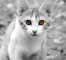 Crete Kitty by CinB