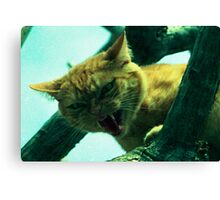 oi cranky cat Canvas Print