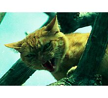oi cranky cat Photographic Print