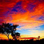 Australia' s North West by Sheldon Pettit