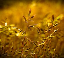 ...those golden tones... by Geoffrey Dunn