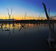 Beachmere swamp by David James
