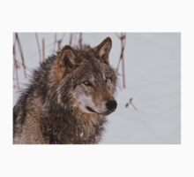 Timber Wolf Portrait  T-Shirt
