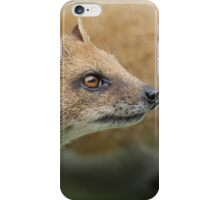 Yellow mongoose iPhone Case/Skin