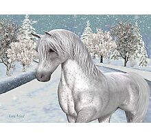 Winter Snow .. the tale of a wild horse Photographic Print