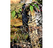 barbed wire post Photographic Print